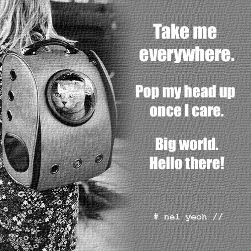 Pop Up ...