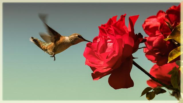 summer nectar