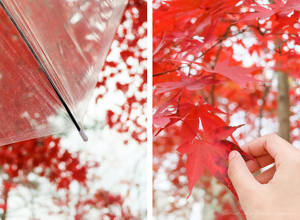 red_maple_leaves_nami_island