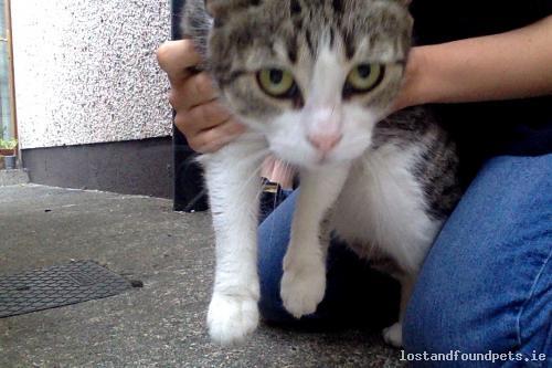 Fri, Jul 13th, 2018 Found Female Cat - Rathwire, Killucan, Westmeath, Antrim