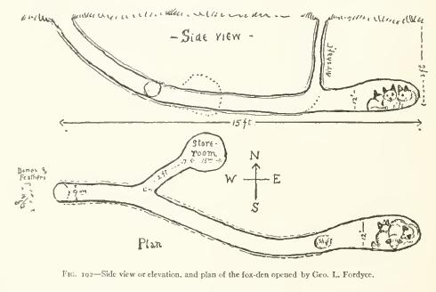 Side and above view of a red fox den. From Life-histories of northern animals : an account of the mammals of Manitoba. Originally published 1909 by Charles Scribner's Sons, New York.