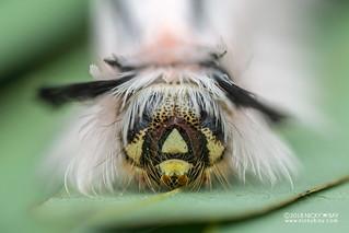 Caterpillar - DSC_3838
