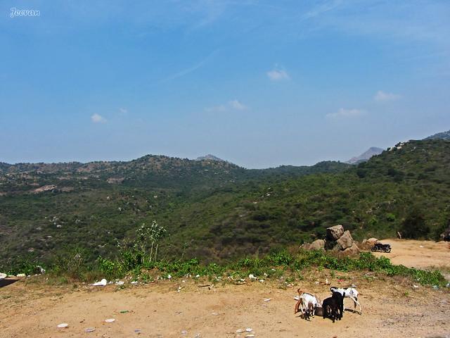 Palamathi Hills near Vellore