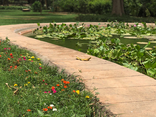 City Nature - The Magic of Portulaca Flowers, Lodhi Gardens