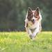 28/52 Run Iggy, run