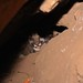 Kittens P-66 through P-69 by Santa Monica Mountains National Recreation Area