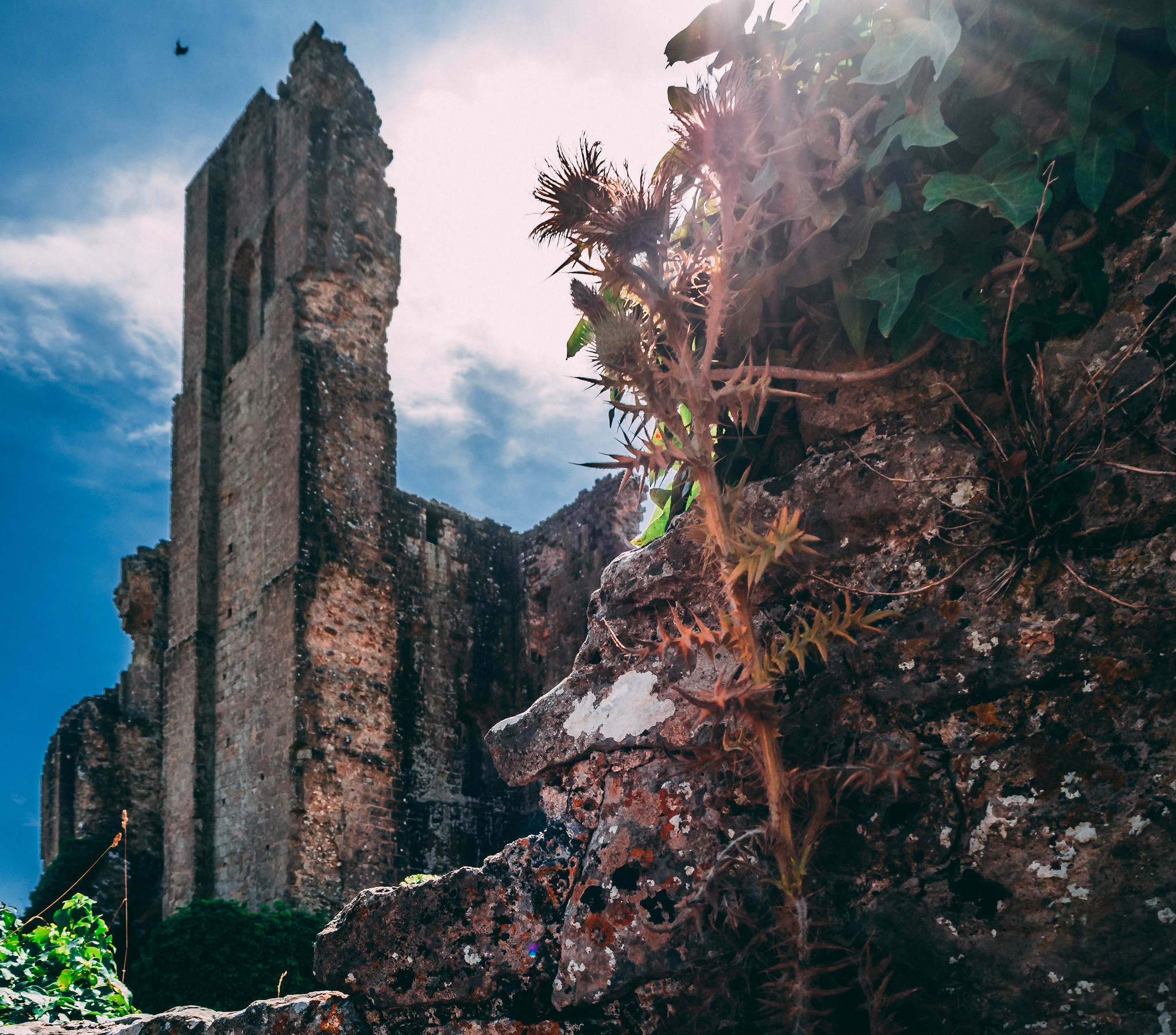 Corfe Castle Ruins - The Plants Reclaiming