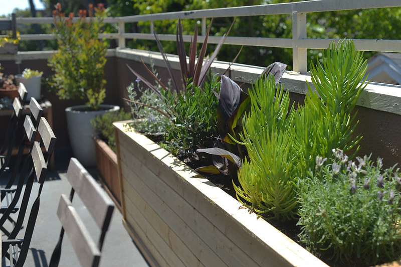 new plants & planter box