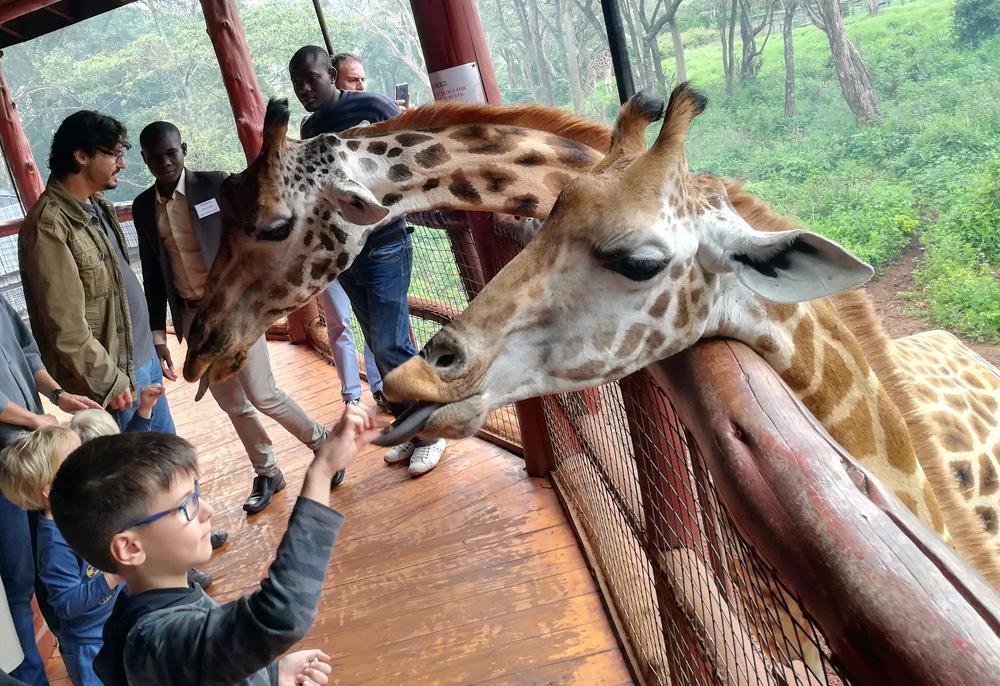 feeding-giraffes-kenya