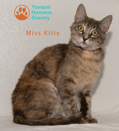 miss_kitty_logo_38935878-20180703-109