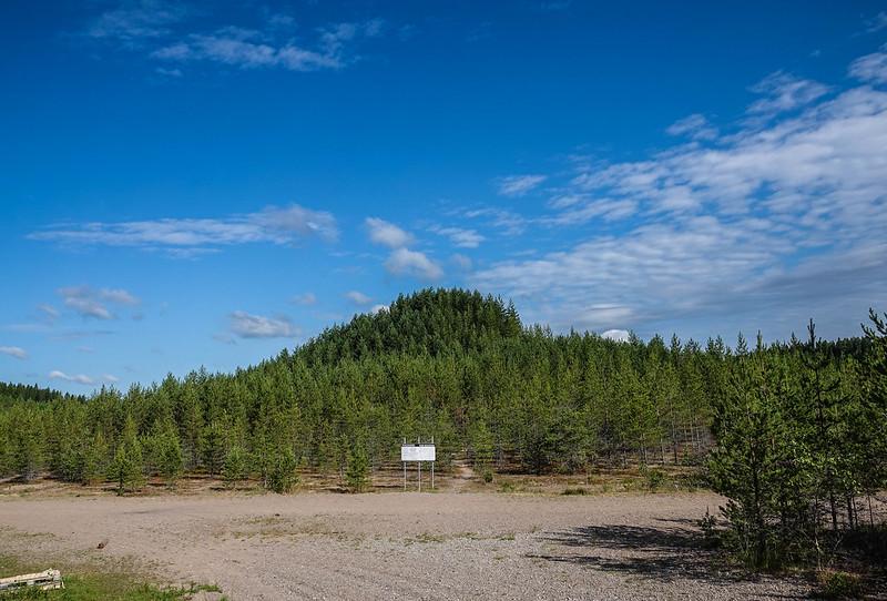 Puuvuori / Tree mountain