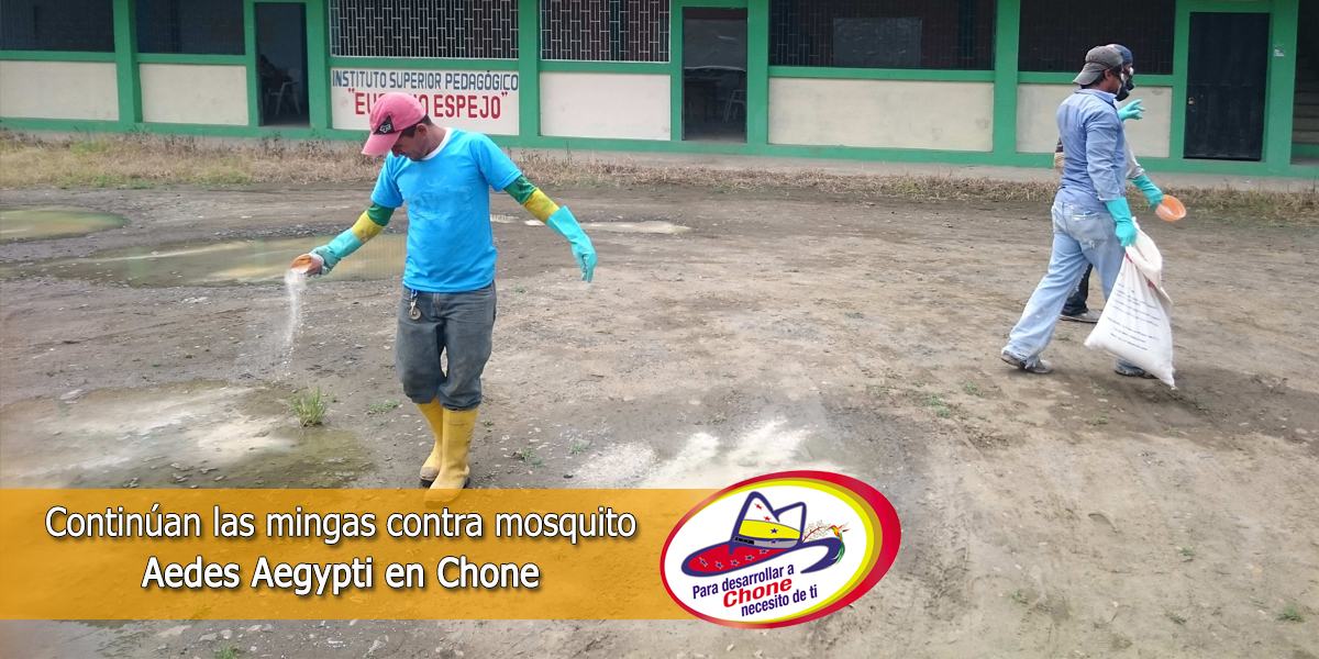 Continúan las mingas contra mosquito Aedes Aegypti en Chone