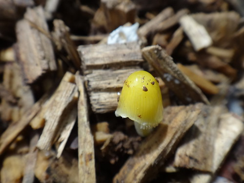 Пошли грибы