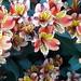 Kew Gardens by EMStanton