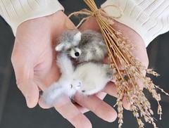 Bunny - raccoon