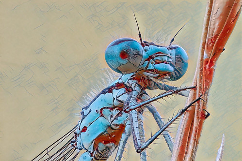 abstract dragonfly