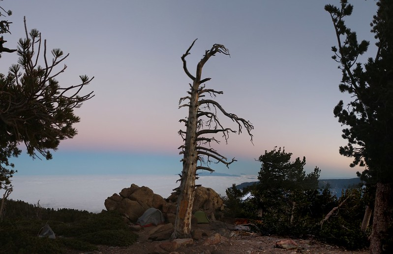Looking west at dawn from Limber Pine Bench