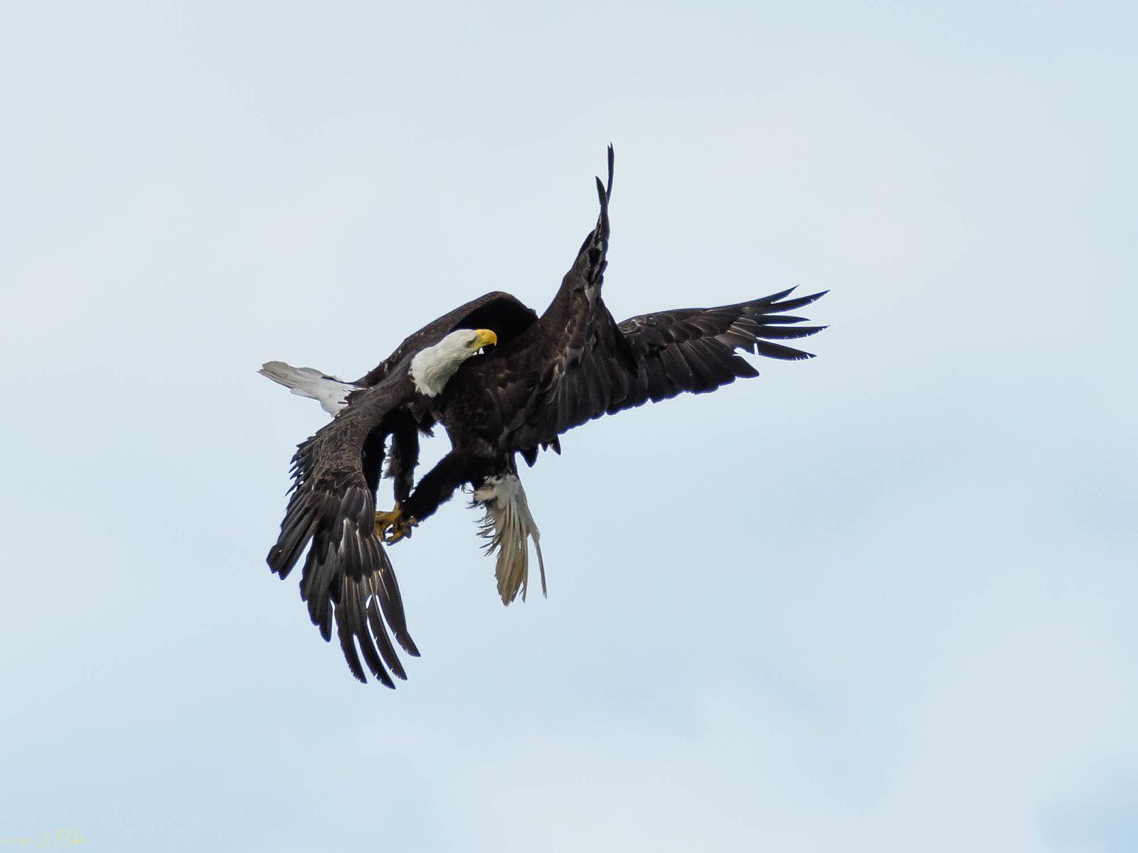 Bald Eagle Dance-7.jpg