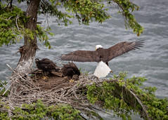Boyle park nest-3