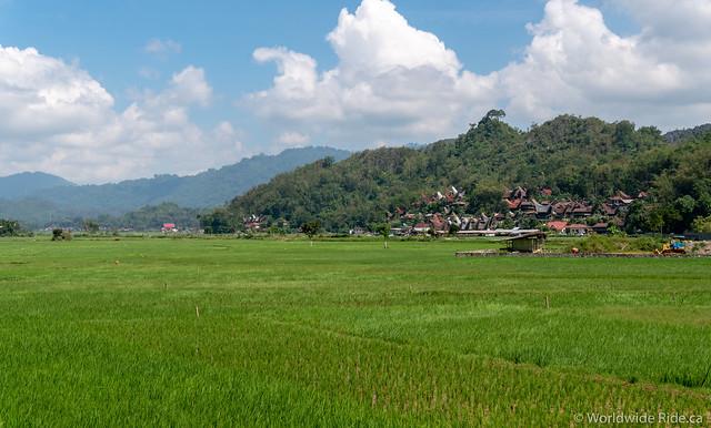 Sulawesi-63