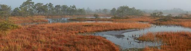 Raba / Raised bog, Estonia