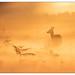 In the mist by stephen.darlington