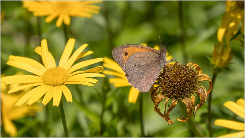 Jardin botanique Saverne: Paps 43040197932_debe794bce_b