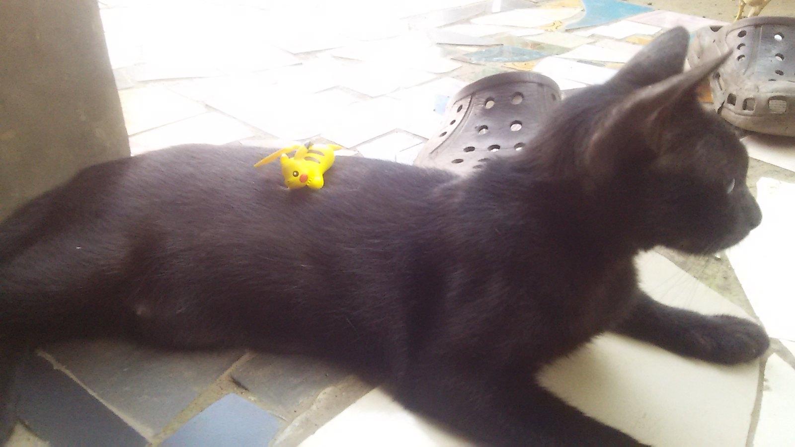 Pikachu & Cat