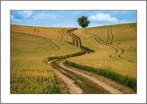 Der Weizen wird reif (wheat will soon be ripe)