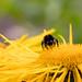 Scotland's Gardens Craigintinney Telferton July 2018 -124