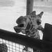 Columbus Zoo BW 5-31-2014 11-43-09 AM