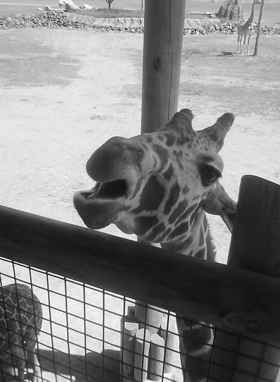 Columbus Zoo BW 5-31-2014 11-43-09 AM