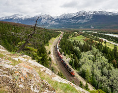 CN, English in Jasper NP from North to South, 11.06.2018