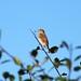 Summer bird