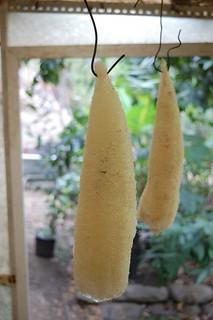 esponja-vegetal-cosecha-almacenamiento_8