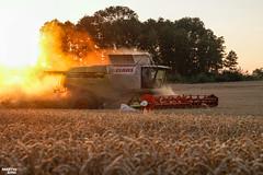 CTF Wheat Harvest 2018   CLAAS LEXION