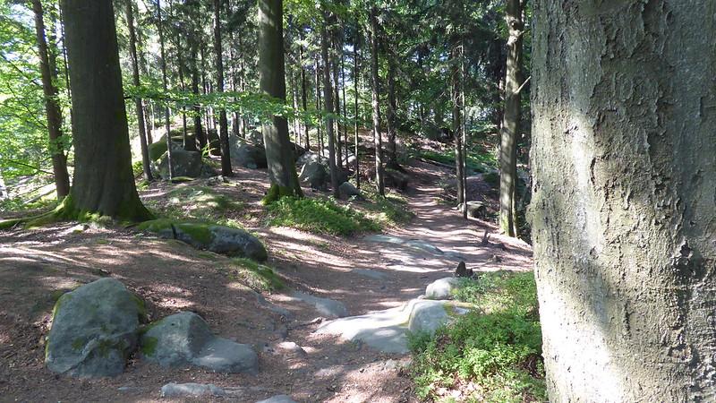 Elbsandsteingebirge - Dichte Wälder