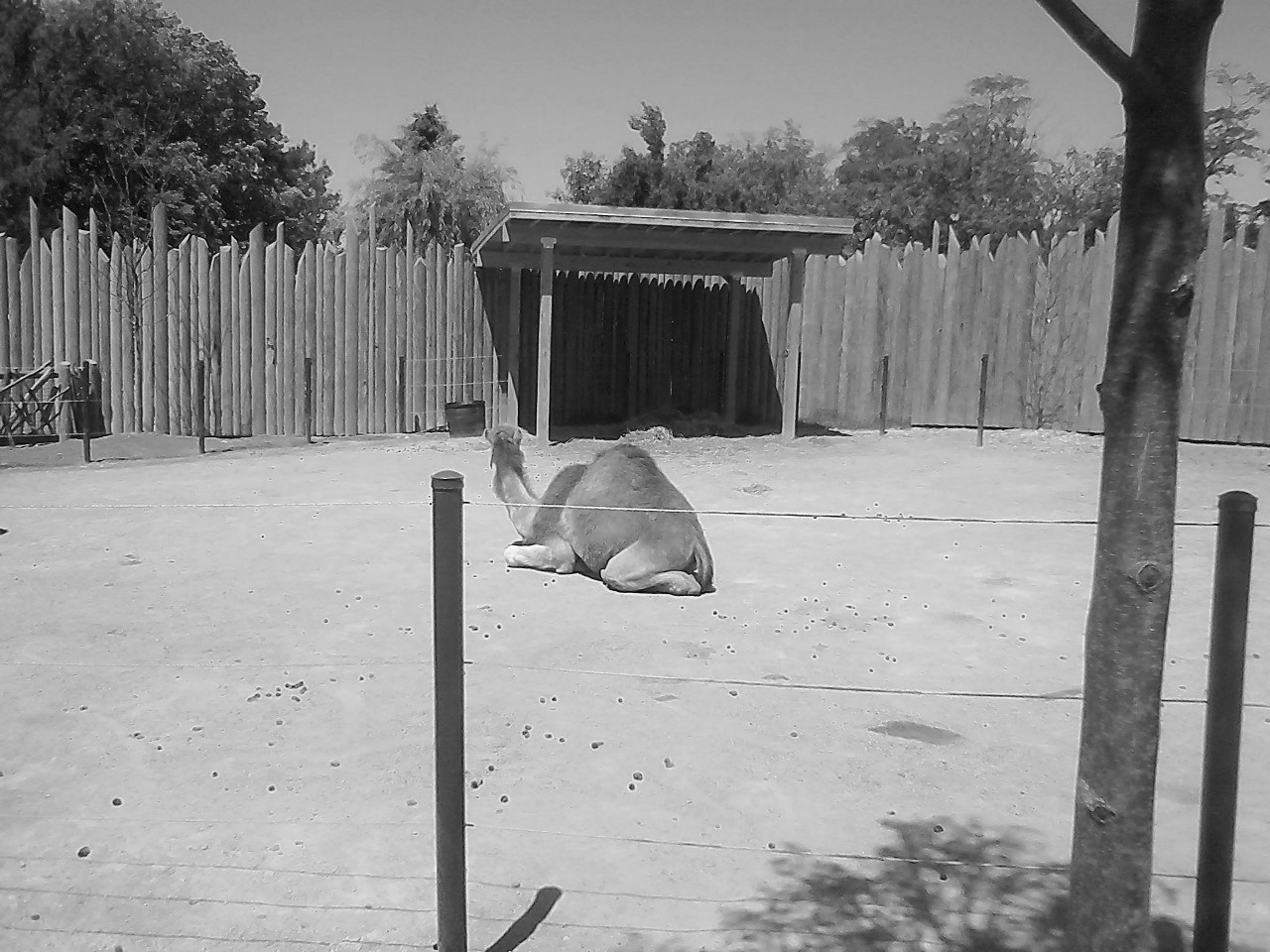 Columbus Zoo BW 5-31-2014 11-53-29 AM