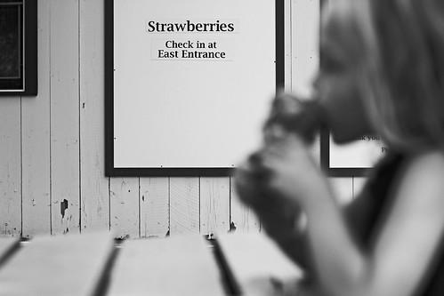 Last day of school celebration strawberry picking