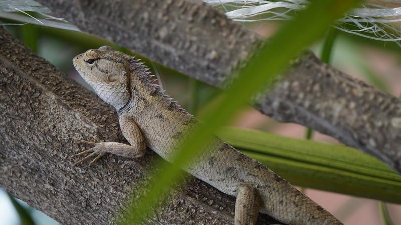 DSC07528 Индия. Национальный парк Джим Корбетт. Индия. Национальный парк Джим Корбетт. 43041440201 d0c72e1eba c