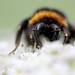 The bee's (orange) knees