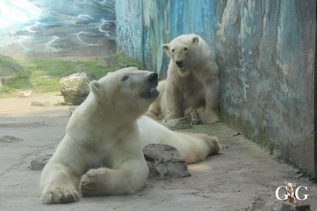 Besuch Zoo Sosto 17.06.201836
