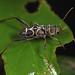 long-horned beetle by myriorama