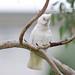 <p><a href=&quot;http://www.flickr.com/people/enyaw007/&quot;>Wayne Ellis1</a> posted a photo:</p>&#xA;&#xA;<p><a href=&quot;http://www.flickr.com/photos/enyaw007/29074017078/&quot; title=&quot;_DSC6989&quot;><img src=&quot;http://farm2.staticflickr.com/1771/29074017078_43f0e1b382_m.jpg&quot; width=&quot;240&quot; height=&quot;159&quot; alt=&quot;_DSC6989&quot; /></a></p>&#xA;&#xA;