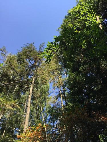 heat wave holland cabin dry forest Achterhoek