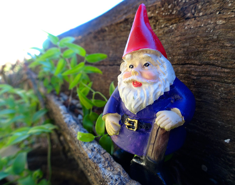 Garden gnome (macro)