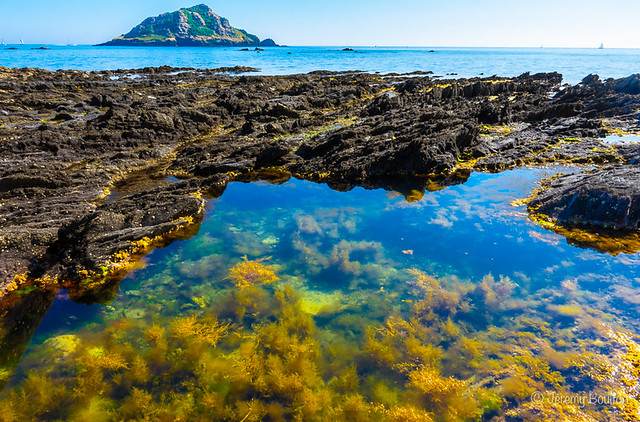 Wembury Rock Pool