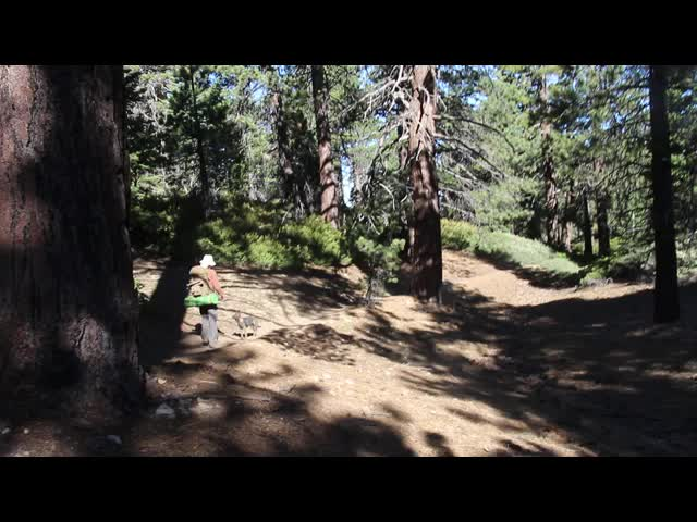 299 Video of a puppy playing fetch with a large pine cone on the San Bernardino Peak Trail