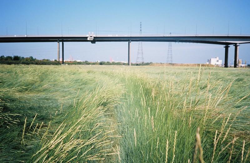 Path through the sea of grass