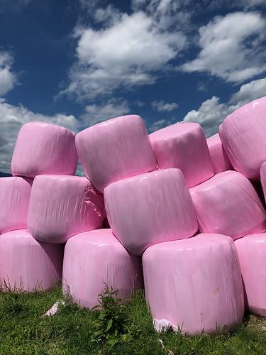Mashmallows auf dem Weg